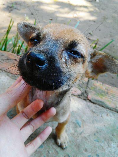 Dog Sad :( Weep Vietnam