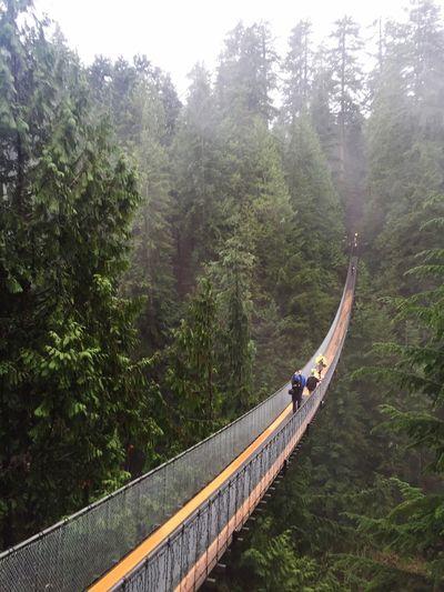 Bridge Man Made Structure Vancouver Canada Capilano Capilano Suspension Bridge Green Tourism Tourist Attraction  Walking Original Experiences