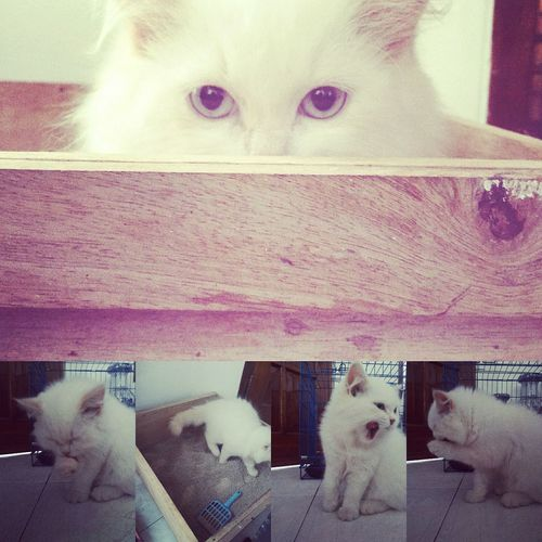 Cat♡ You're The One For Me EyeEm Animal Lover