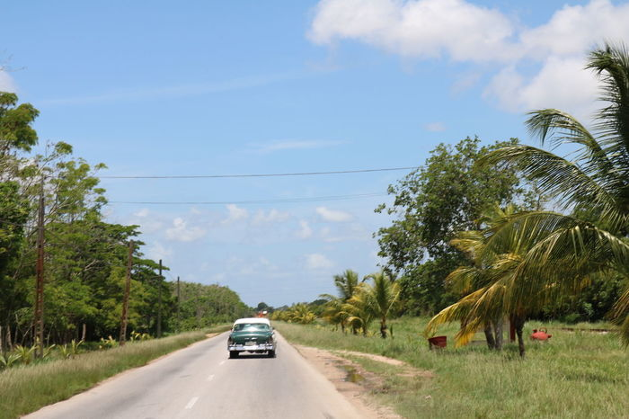 Car Road Driving Transportation Tree The Way Forward Cloud - Sky Outdoors Travel Destinations Nature Sky Day No People Grass EyeEmNewHere Cuba Streets Cuba Cuba Collection Cuban Cars Neighborhood Map Live For The Story EyeEm Selects Been There.