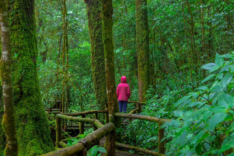 Lady in the rain forest Green Color Adult Beauty In Nature Day Forest Full Length Green Color Growth Land Leisure Activity Nature One Person Outdoors Plant Rain Forest Plants Rain Forest Tree Rain Forest Trees Rear View Standing Tree Tree Trunk Trunk Walking Women WoodLand