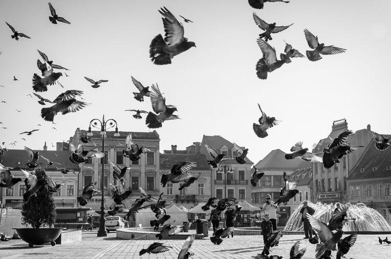 Birds Black Black & White Black And White Blackandwhite Blackandwhite Photography Flying Public Square White