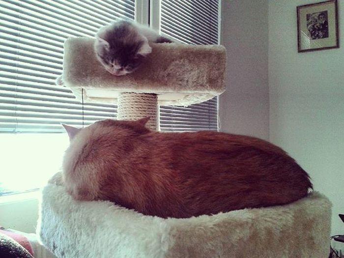 😻😽😺 Cat Instacat Kitten Instakitten Redcat Tricolor Britishcat Princesses Brno Ginger Lilou Friends Kocicky Micinky Holcickybucaji Novyskrabadylko Tatinekseonasmochezkystara 😊😍