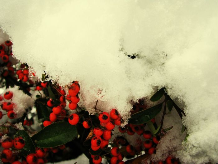 Wild Flowers Snow Red