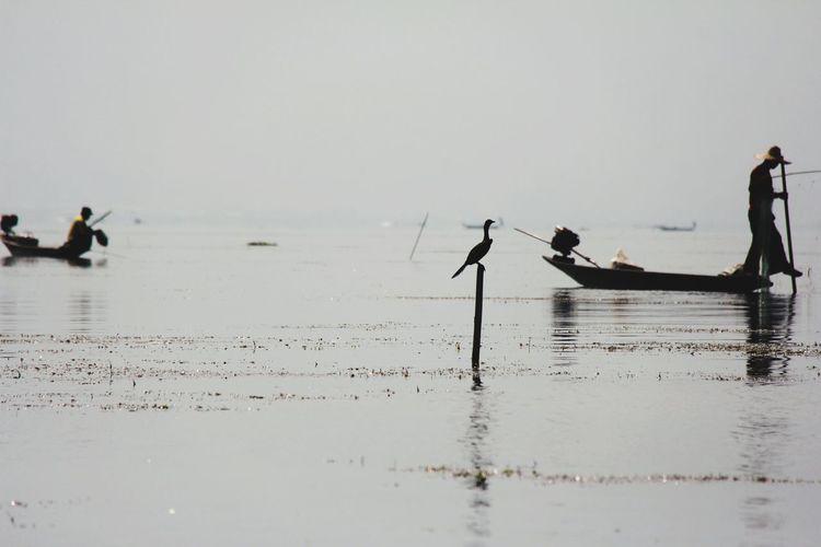 Kingfisher Water Low Tide Occupation Men Fisherman Sea Silhouette Full Length Beach Reflection