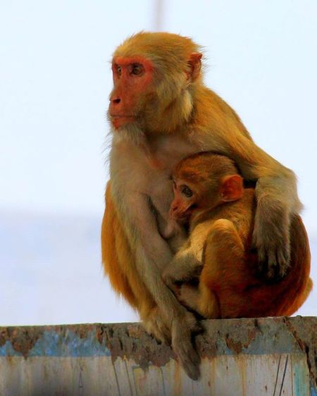 Mother and child. Iso-400. 1/2000fps Monkey Mother Child Travel Canon Canon_photos Canon1100d Canon1100 Nature Yellow Tiny Details DSLR Green Love Eyem Gallery Eye Em Nature Lover Eyemphotography EyeEm Best Shots - Nature EyeEmBestPics EyeEm Best Edits EyeEm Gallery EyeEm Best Shots