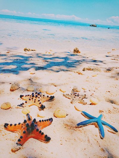 Art Is Everywhere Seascape Photography Starfish  Starfish At Beach Beach Sand Sea Shore Nature Water Scenics Sky Sea Life Eyem Best Shots Eyemnaturelover Summertime Paradise Seascape Horizon Over Water