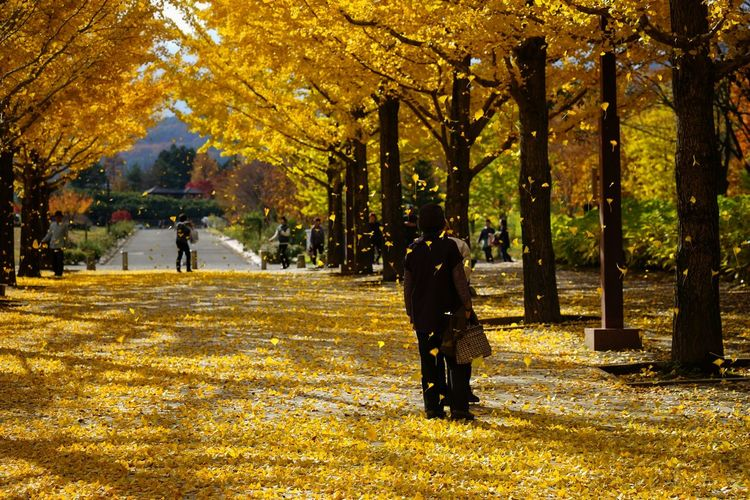 Men standing on yellow leaves by trees at park during autumn