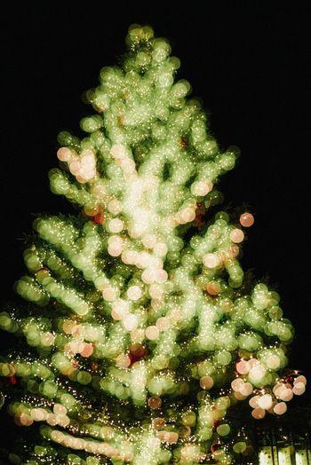 Christmas Christmas Tree Christmas Decoration Night No People Green Color Celebration Black Background Christmas Ornament Studio Shot Christmas Lights Illuminated Close-up Tree Nature Freshness