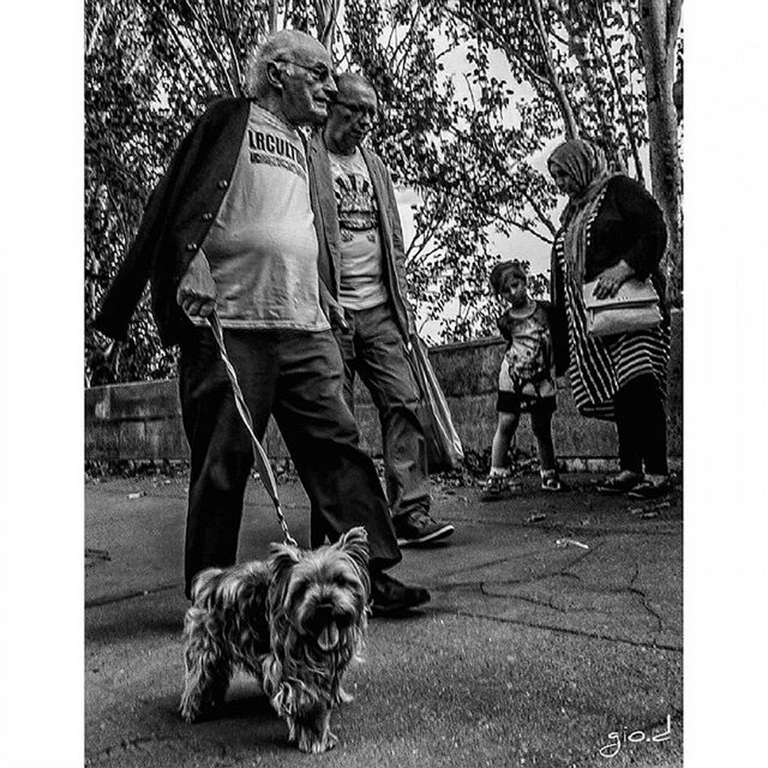 transfer print, mammal, pets, dog, domestic animals, full length, auto post production filter, animal themes, one animal, men, lifestyles, leisure activity, casual clothing, street, rear view, day, sitting, togetherness