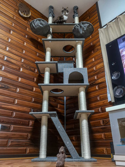 cat tower Cat