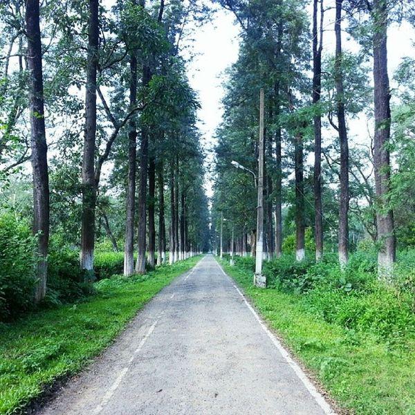 Longwalk Greens