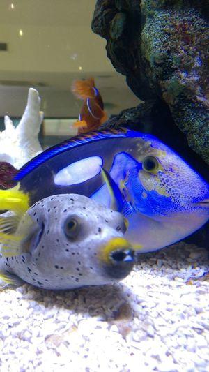 UnderSea Sea Life Water Swimming Underwater Sea Aquarium Sand Close-up