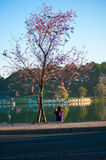 Spring in Da Lat city, Lam Dong province, Vietnam. ASIA City Street Photography Cityscape Da Lat City Da Lat City, Vietnam Hồ Xuân Hương Lake Nikon Quan Hoang Photography Sakura Trees South East Asia Street Life Street Style From Around The World Street Vietnam Vietnamese Working Bike Flower Lake Landscape_photography Nikon Vietnam Photography Nikonphotography Sunrise_sunsets_aroundworld Sunset #sun #clouds #skylovers #sky #nature #beautifulinnature #naturalbeauty #photography #landscape Vietnam Tours Vietnamphotography Water