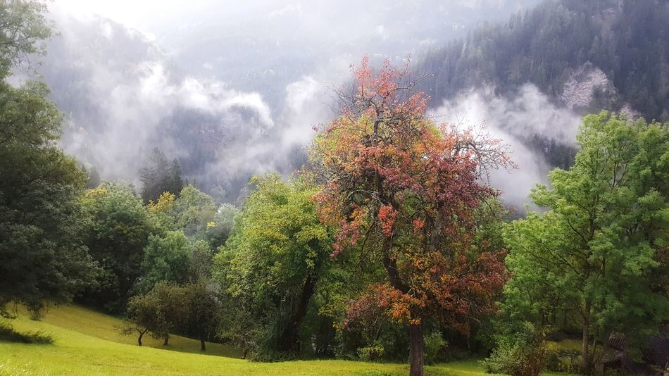 Tree Growth Outdoors Nature No People Mountain Day Sky Beauty In Nature Switzerland Globetrotter Summer Mountains Landscape Nature _collection Nature Beauty Fog Nature Is Art Beauty In Nature Autumn Autumn Colors Autmn Trees Autmn Landscape Autmun Leaves Wanderlust Summer Exploratorium