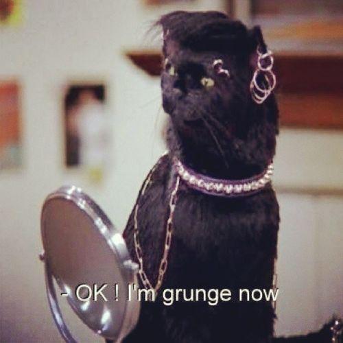 Hahaha. Grungecatshappycats NEEDBLACKCAT ♥