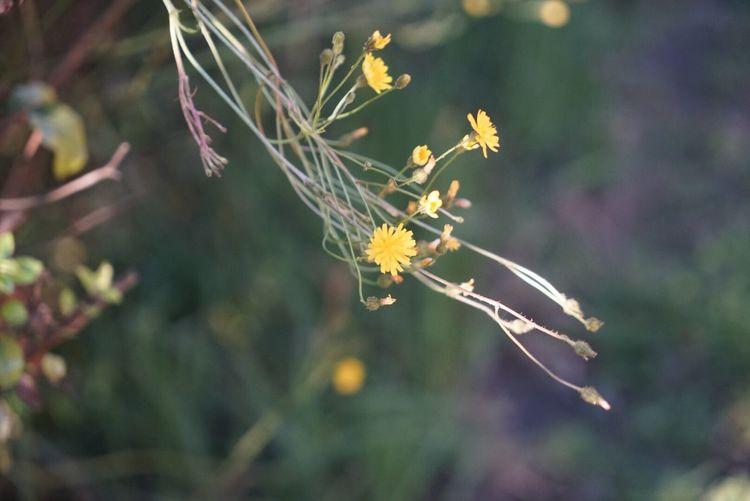 """""""Weed"""" Flower"""