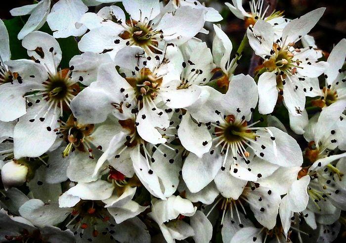 Spring Fruitflower Apple Nature_collection Benimgözümden Hayatakarken Benimkadrajim Objektifimden Hayatinrenkleri Weekend Beauty In Nature Nature Colorsofspring Objektifimdenyansıyanlar