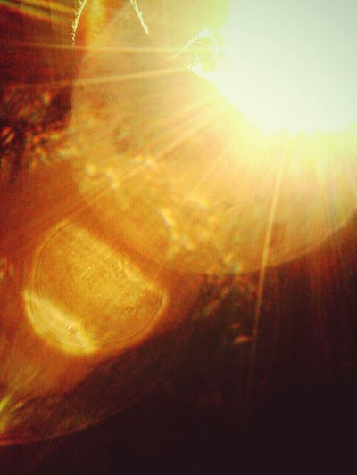 Zunbêam Sunflare Meow🐱 Kittycat