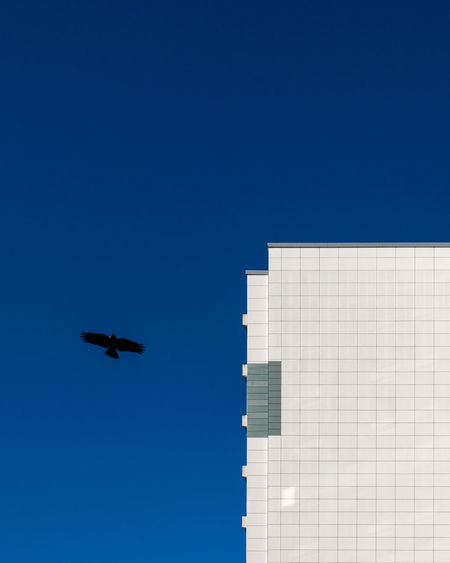 Blue No People Clear Sky Sky Fujix_berlin Ralfpollack_fotografie Minimalism Minimalist Photography  Flying Building Exterior Copy Space Architecture Bird Built Structure Travel Motion Skyscraper