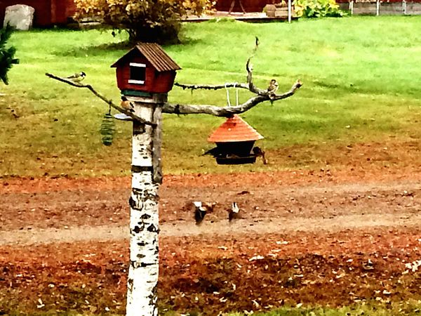 Birds Atumn Outdoors Feeding The Birds