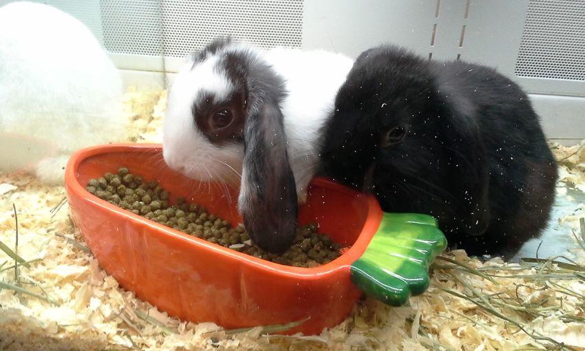 Bunnies Petstore Cute Rabbits