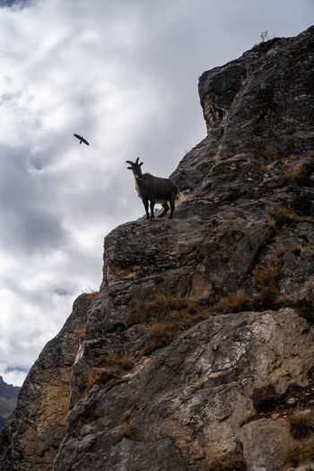 Low angle view of giraffe on rock against sky