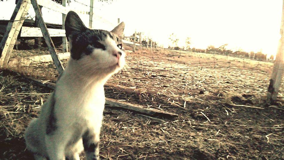 Katniss Kitty F*****cat Crazy Cat Farm Life EyeEm Nature Lover EyeEm Gallery Amateurphotography