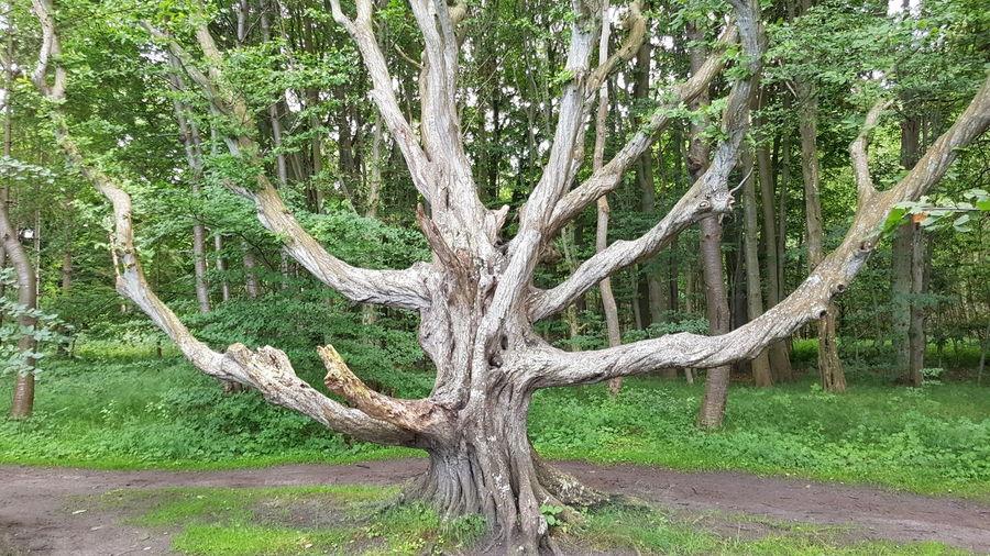 Gespensterwald Outdoors Baum Wald