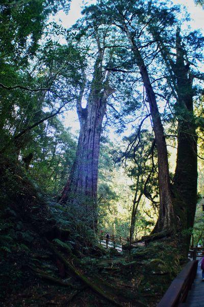 臺灣 Tree Nature Growth No People Sky Beauty In Nature Outdoors Low Angle View Forest Tranquility Scenics Day Water Freshness Taiwan 恩愛農場