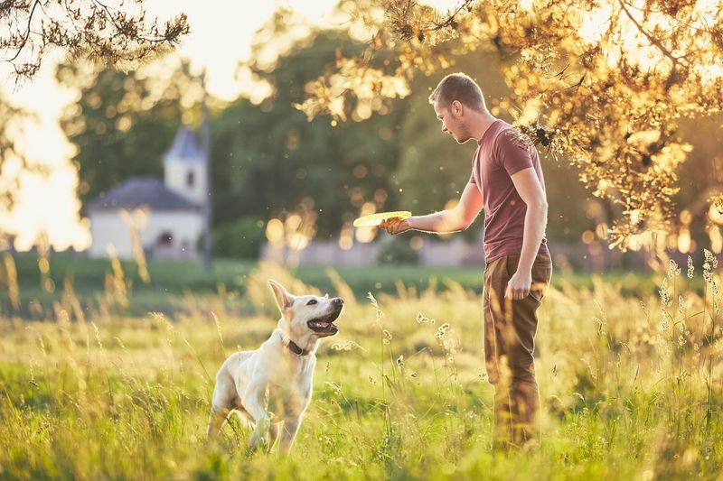 Man throwing plastic disc with dog on field against tree
