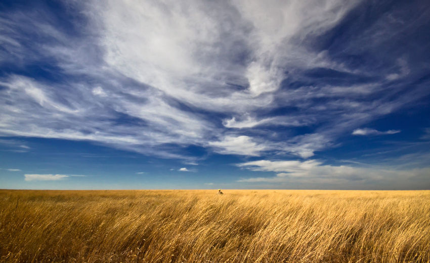 Sitting all alone on the plains of western kansas