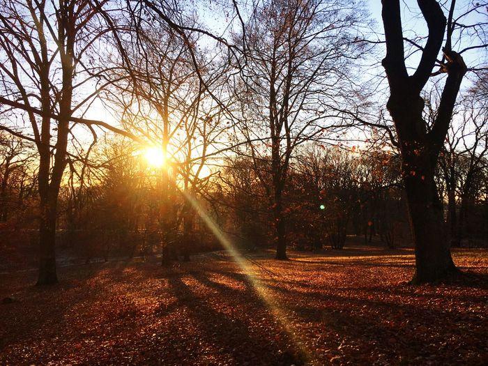 Tree Sunbeam