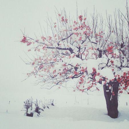 Nature Snow WHiTE WORLD