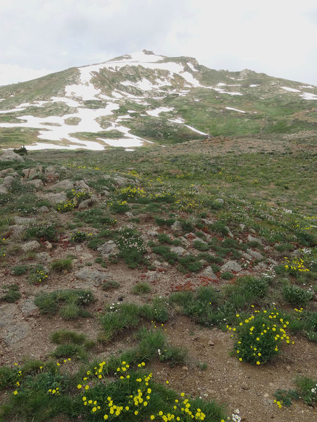 Independence Pass Beauty In Nature Blossums Day Flowers Landscape Mountain Nature No People Outdoors Scenics Sky Snow Capped Summer Tranquil Scene Tranquility