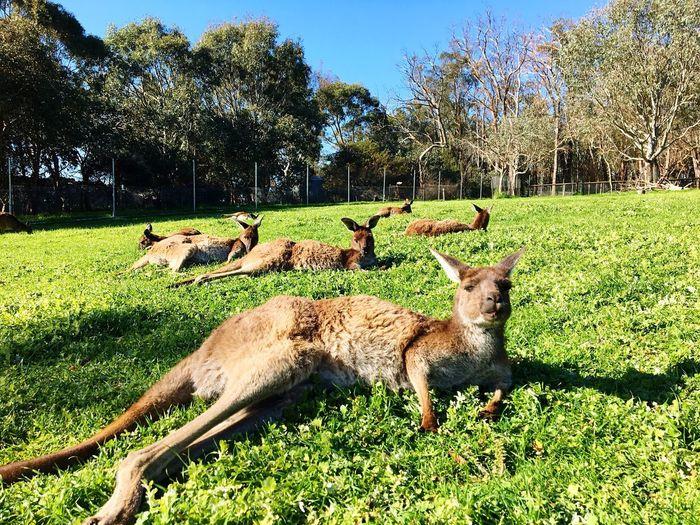 袋鼠瘫 Cute Relaxing Travel Plant Mammal Animal Themes Animal Vertebrate Green Color Nature Grass Animal Wildlife