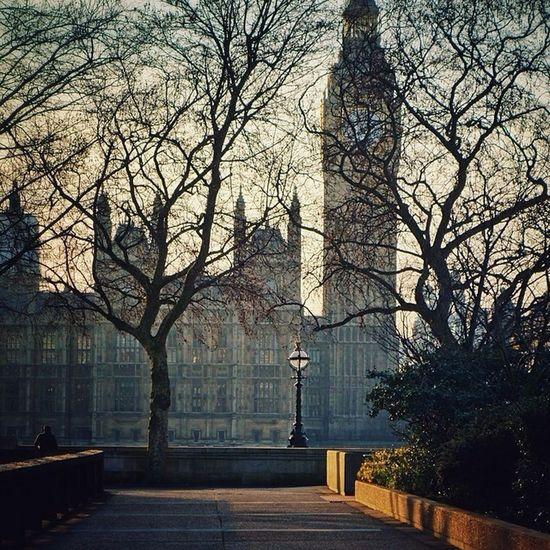 Evening #sun through naked trees ☀️???#bigben #spring #london #elizabethtower Sun Spring London Bigben Elizabethtower