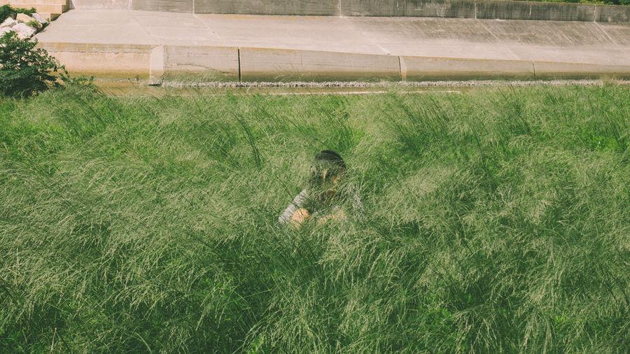 Grass growing in farm
