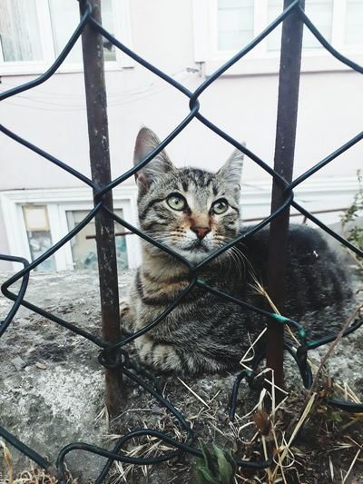Cat sitting by fence