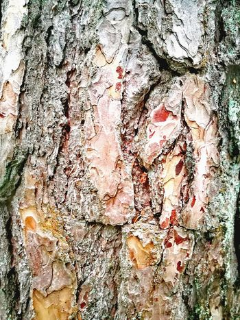Swedish Nature Pine Bark Pinetree Backgrounds Full Frame Textured  Pattern Abstract Paint Close-up