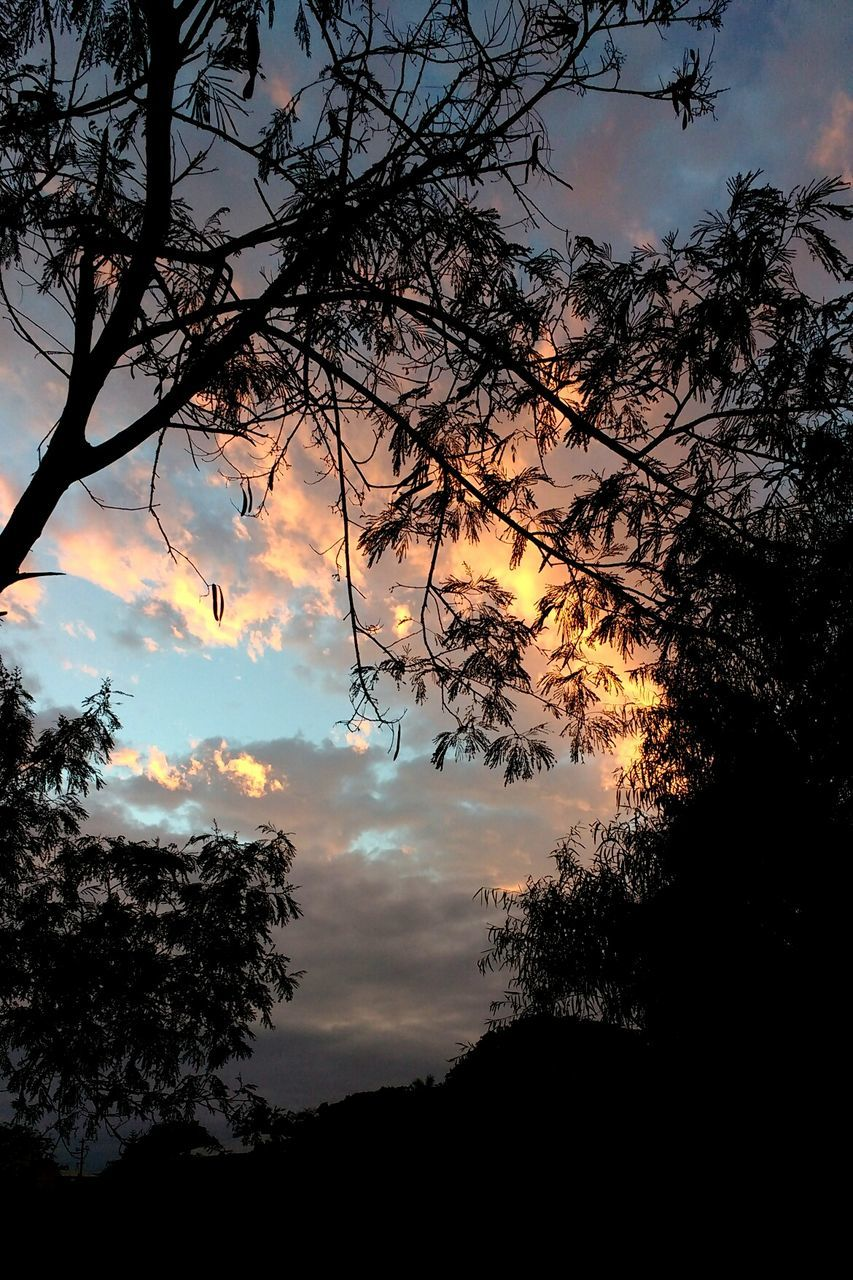 tree, silhouette, sky, low angle view, nature, sunset, beauty in nature, branch, tranquil scene, no people, scenics, cloud - sky, tranquility, outdoors, day