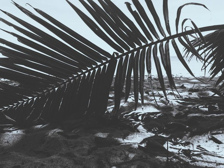 Palm Palm Leaf Sea Nature_collection Check This Out Blackandwhite Black And White Photography Exploring Beach Beachphotography Island Sabang Palawan Itsmorefuninthephilippines Travel Travel Photography Backpacker