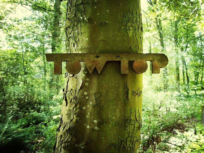 Tow Top