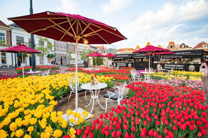 Tulips Beauty In Nature City Flower Housetenboss Multi Colored Nature Outdoors Red Sky Yellow ハウステンボス