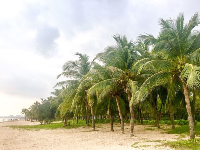 Tree Plant Sky Cloud - Sky Land Nature Growth Day Beauty In Nature Tranquility Outdoors Green Color No People Tranquil Scene Field Scenics - Nature Sand Beach Environment Sunlight