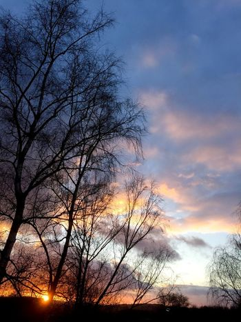Sky Sunset Clouds Trees