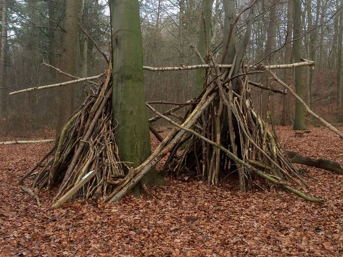 Childrens work: Tipis Tree Forest Land Plant Tree Trunk Trunk Nature