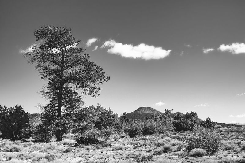 Relaxing Landscape Summer Blackandwhite Photography Monochrome Black And White Landscape Showcase July