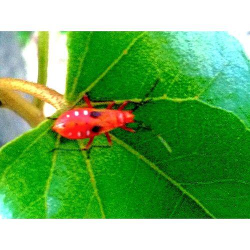 Leaf One Animal