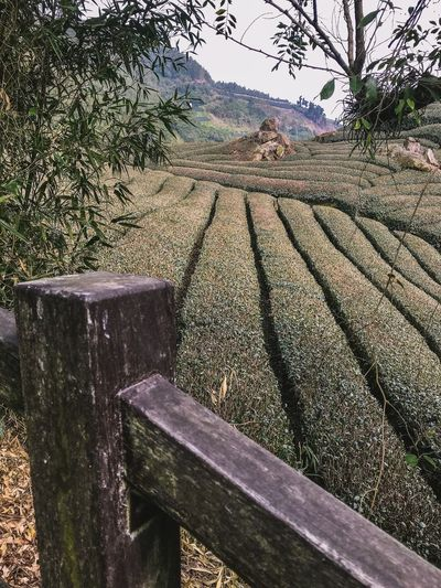 Taiwan Tea Plantation  Landscape Green Scenery ShotOnIphone Ali Mountain Panorama Plant Nature Day Tree No People Sunlight Sky Field Rural Scene Landscape Shadow Land Tranquil Scene Tranquility Scenics - Nature Growth Outdoors Agriculture Beauty In Nature Water